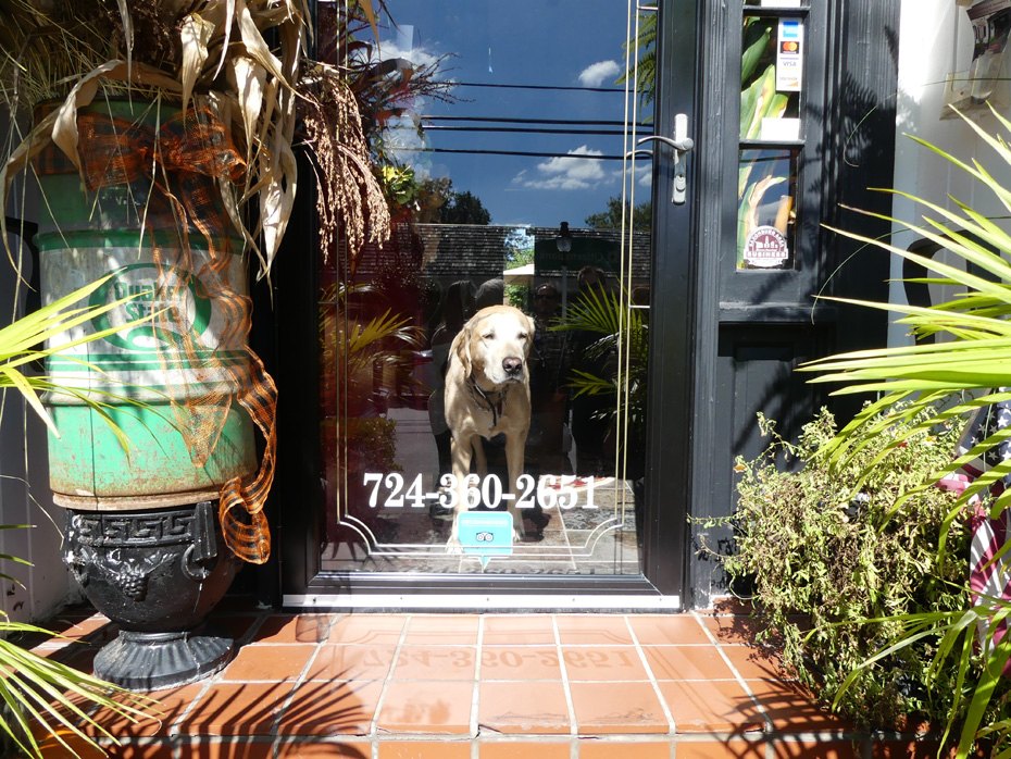 dog looking out glass door at Mainstay B and B