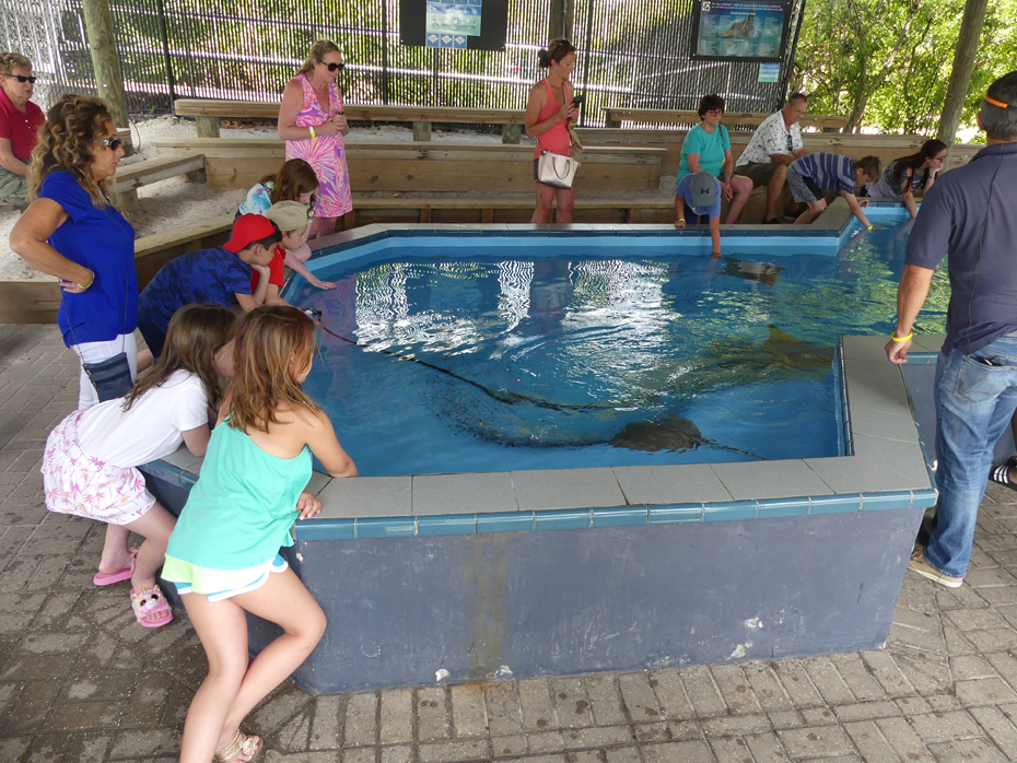 people gathered around a pool with stingrays